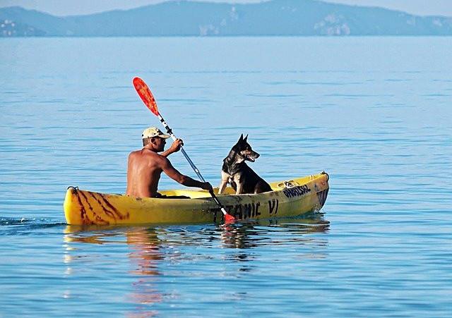 taking your dog kayaking