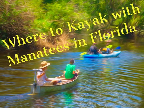 Where to Kayak With Manatees in Florida