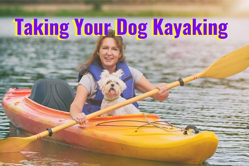 Taking Your Dog Kayaking? Tips for Safe Fun Together