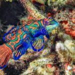 list of aquariums in florida