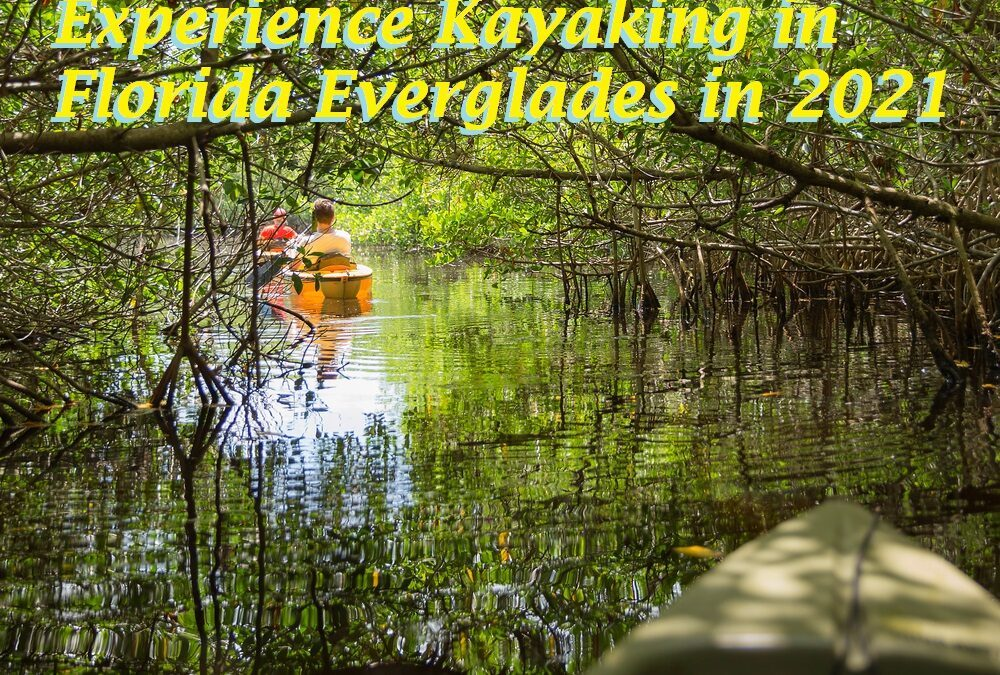 Experience Kayaking in Florida Everglades in 2021