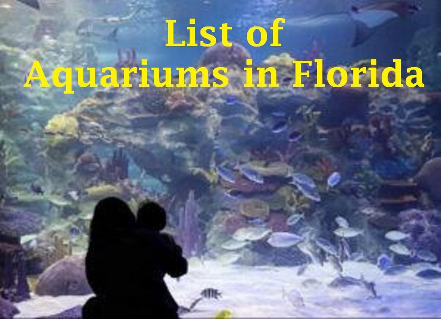 List of Aquariums in Florida – Visit in 2021